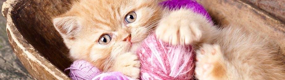 Жестокое обращение с животными статья 245 УК РФ